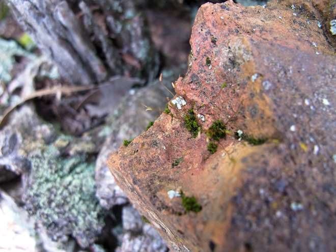 Mossy bricks in the bush, Taradale, Victoria, Australia