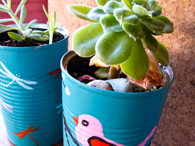 Succulent indoor plants in painted tin cans at the Apples & Jam Playhouse, South Melbourne Commons