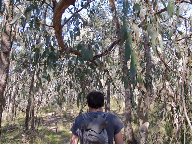 Bush walking just out of Taradale, Victoria