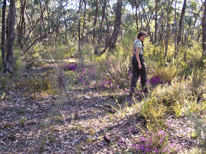 Walking amongst the wildflowers in the bush near Taradale, Victoria