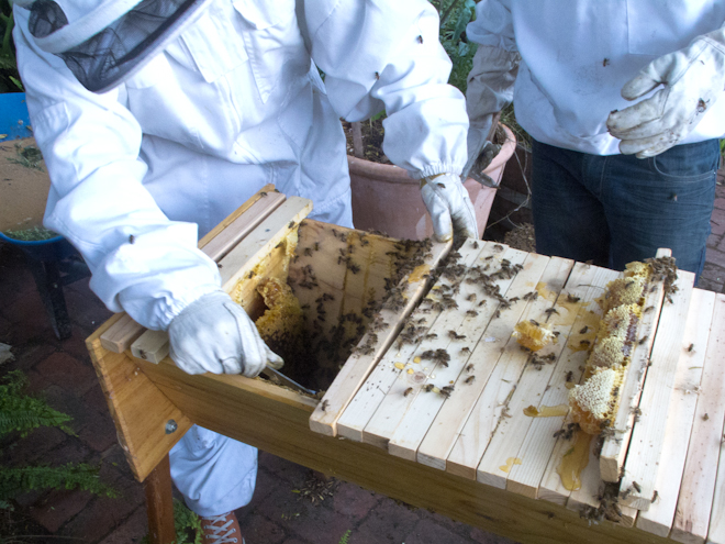 Removing bars from top bar hive