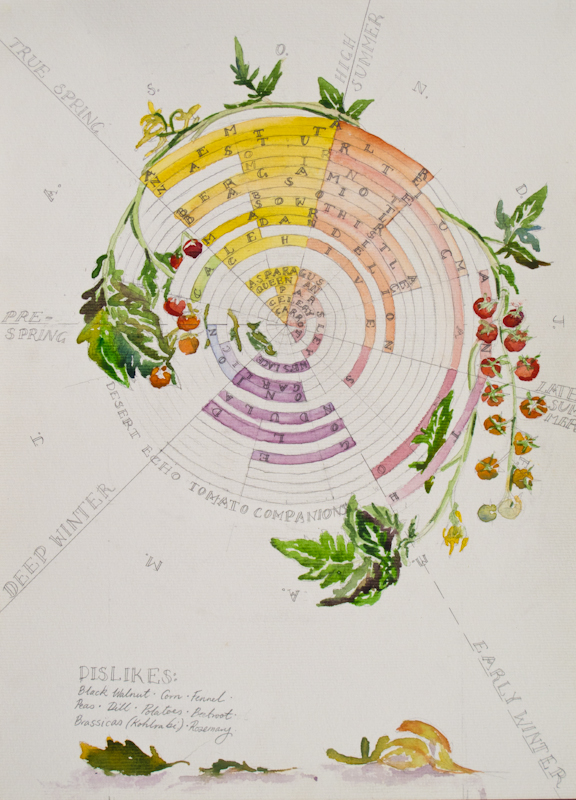 The Desert Echo's Tomato Companion Planting Chart with sowing times