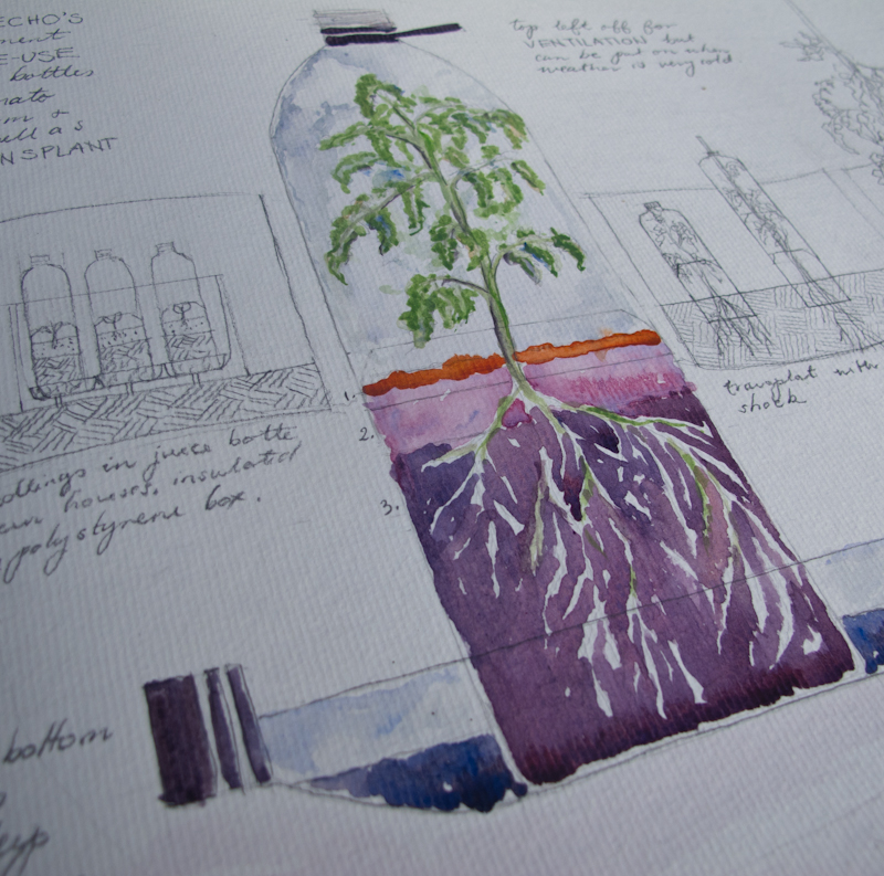 Watercolour design for a re-used plastic bottle greenhouse/pot for seedlings