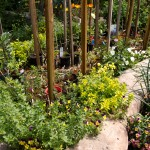 hardening-off-plants-tomatoes-spring-summer-herb-border