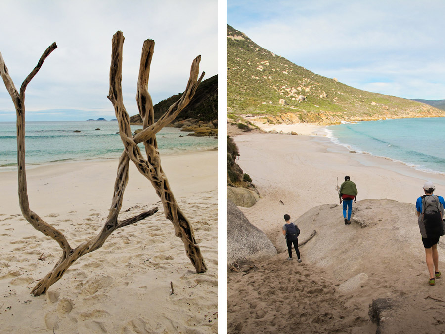 bushwalking-driftwood-sculpture-beach